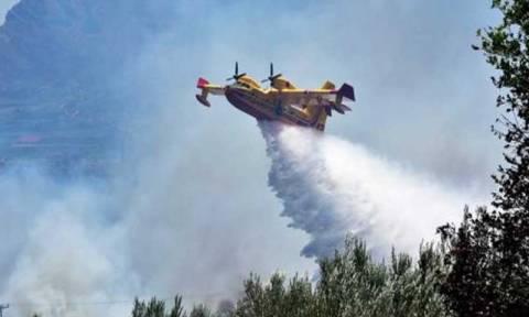Υπό μερικό έλεγχο η φωτιά στην Εύβοια