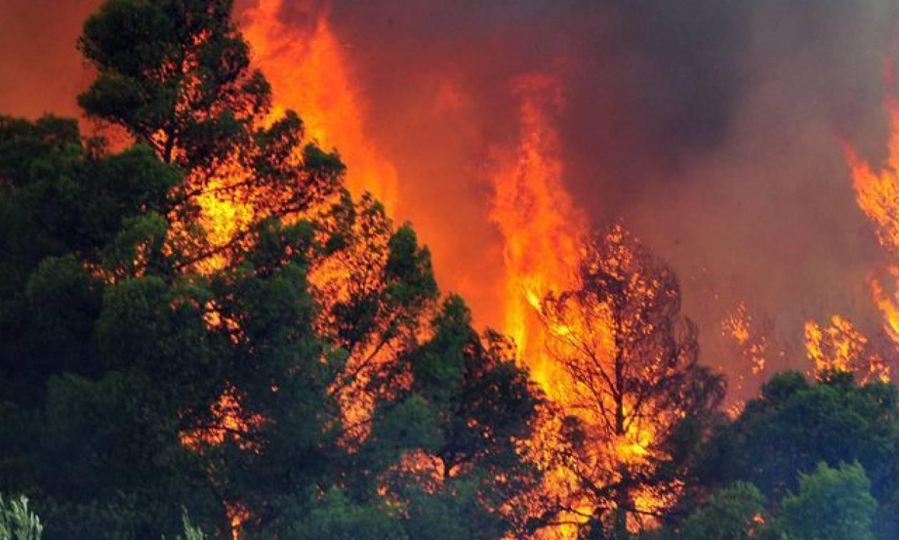 Φωτιά: Μεγάλη πυρκαγιά στα Χανιά