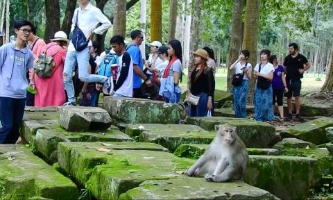 Πεινασμένη μαϊμού περιμένει υπομονετικά μέχρι να της δώσουν φαγητό (vid)