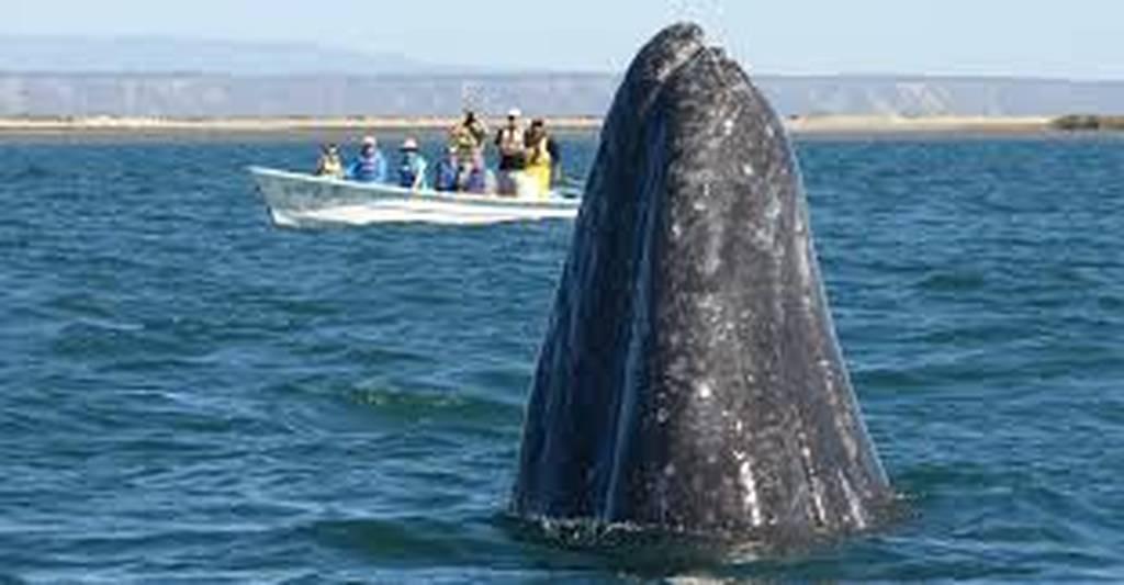 Παρατηρητές φαλαινών έχουν στενή επαφή με φάλαινα όλο περιέργεια (vid)