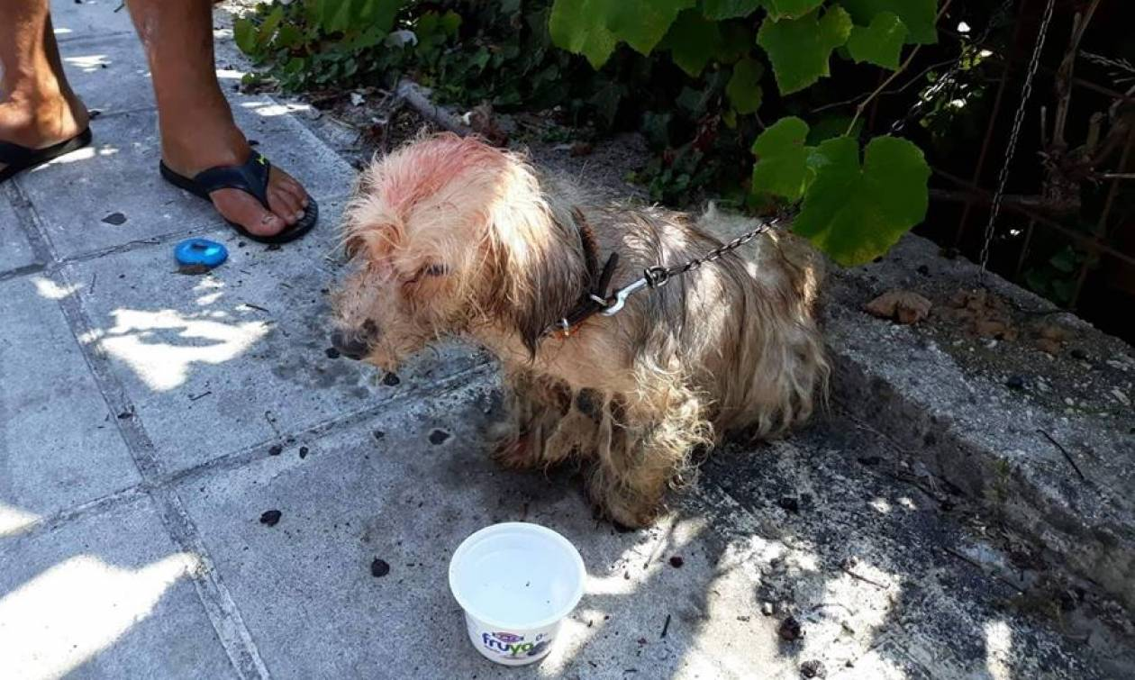 Απάνθρωπες εικόνες στην Κέρκυρα: 62χρονος έλουσε με πετρέλαιο σκυλάκι και το έδεσε σε κολόνα της ΔΕΗ