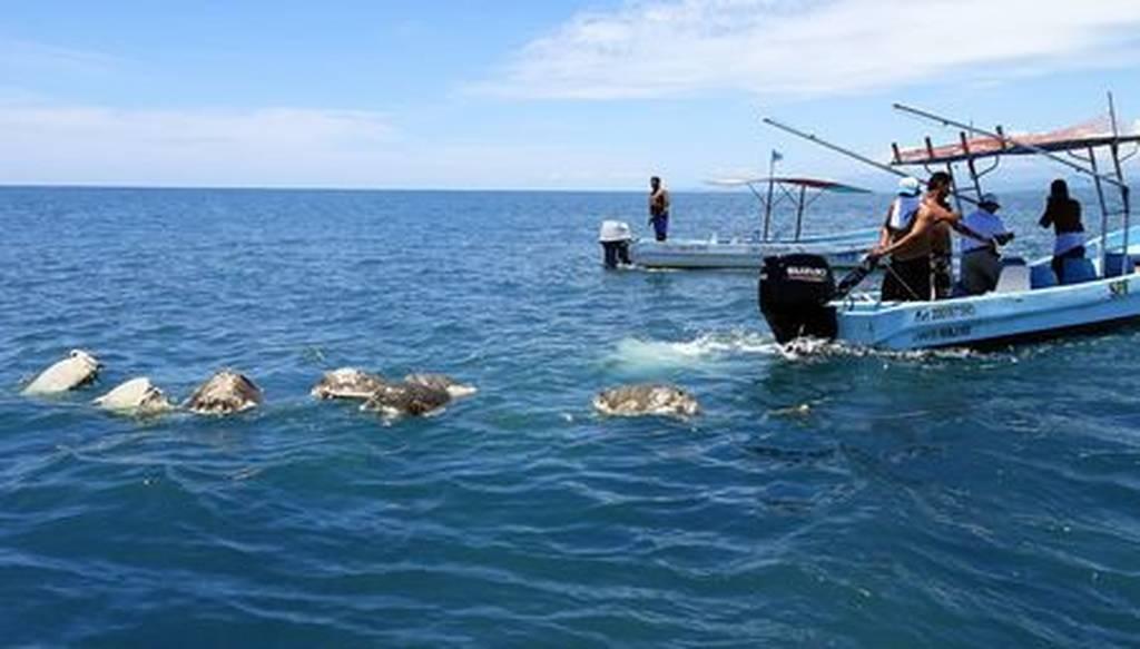 Μακάβριο θέαμα στο Μεξικό: Περίπου 300 σπάνιες χελώνες βρέθηκαν νεκρές στις νότιες ακτές της χώρας