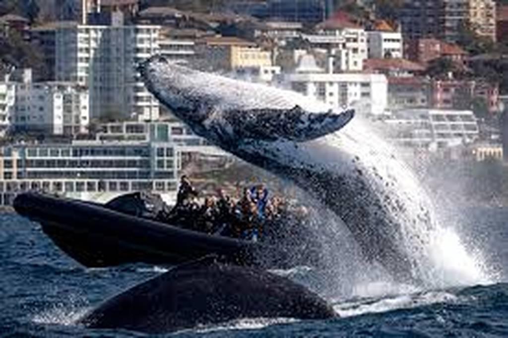 Φάλαινα σε απόσταση αναπνοής από βάρκα με τουρίστες - Έκανε βουτιές δίπλα τους (vid)