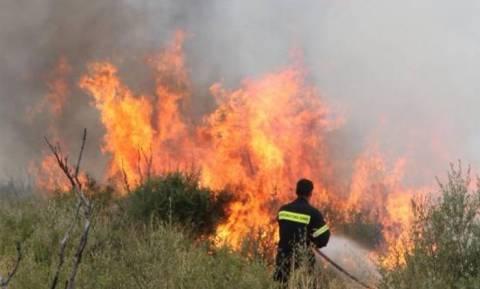 Φωτιά: Συναγερμός για πυρκαγιά στη Βραυρώνα
