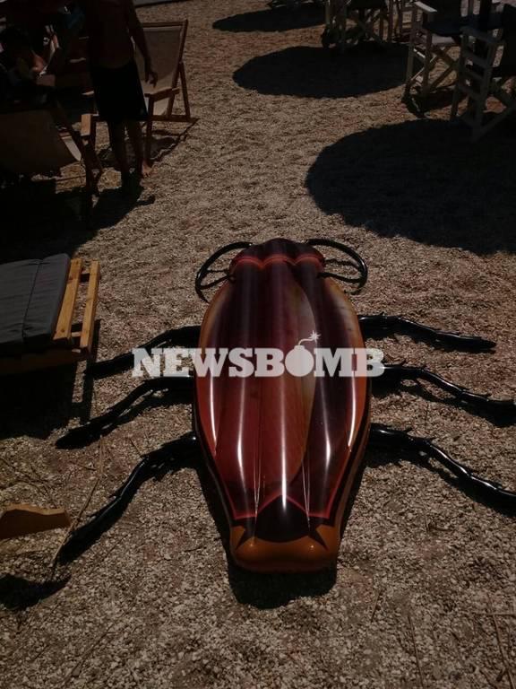 Εικόνες τρόμου στην παραλία στο Ζούμπερι: «Βγήκαν» γιγαντιαίες κατσαρίδες