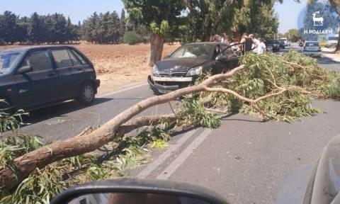 Ρόδος: Οδηγός γλίτωσε από θαύμα όταν τεράστιο κλαδί «προσγειώθηκε» στο αυτοκίνητο