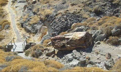 Την έπιασαν στα «πράσα» να κλέβει κομμάτια από το απολιθωμένο δάσος στη Μυτιλήνη (pics-vid)
