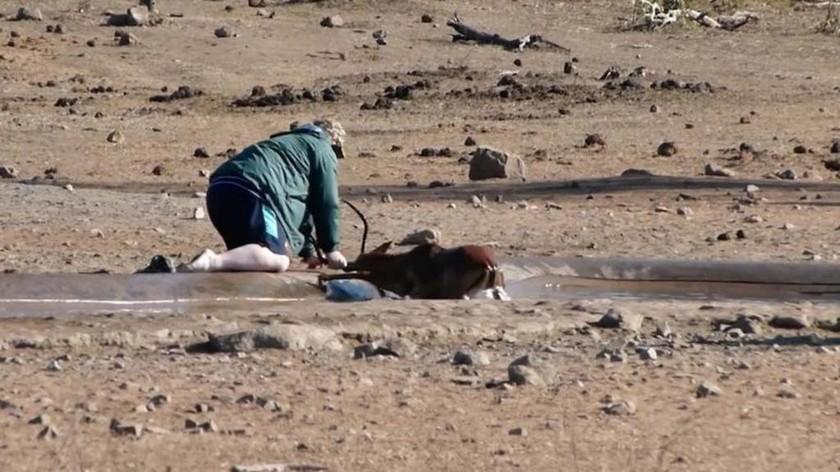 Οδηγός σώζει ελάφι που έχει «κολλήσει» σε λασπόνερα (vid)
