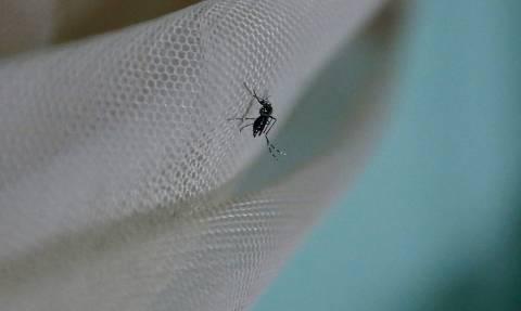 Ιός Δυτικού Νείλου: 60 κρούσματα στην Κεντρική Μακεδονία – Έξι νεκροί από τον ιό