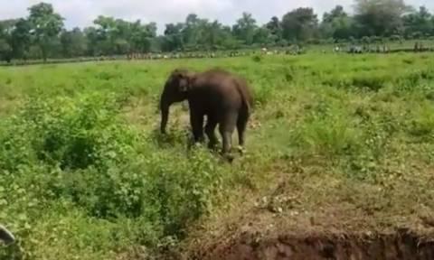 Ινδία: Η δραματική διάσωση μικρού ελέφαντα που εγκλωβίστηκε στη λάσπη (vid)
