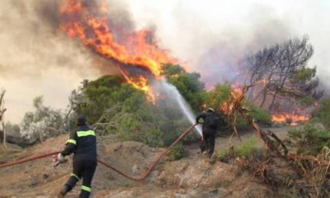 Φωτιές στην Ελλάδα: 30 συλλήψεις τον Αύγουστο για εμπρησμούς σε όλη τη χώρα