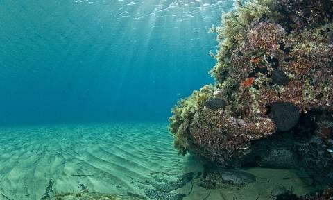 Κορινθία: Ατρόμητος κολυμβητής βούτηξε στη θάλασσα και είδε ένα θέαμα που δεν θα ξεχάσει ποτέ (pics)