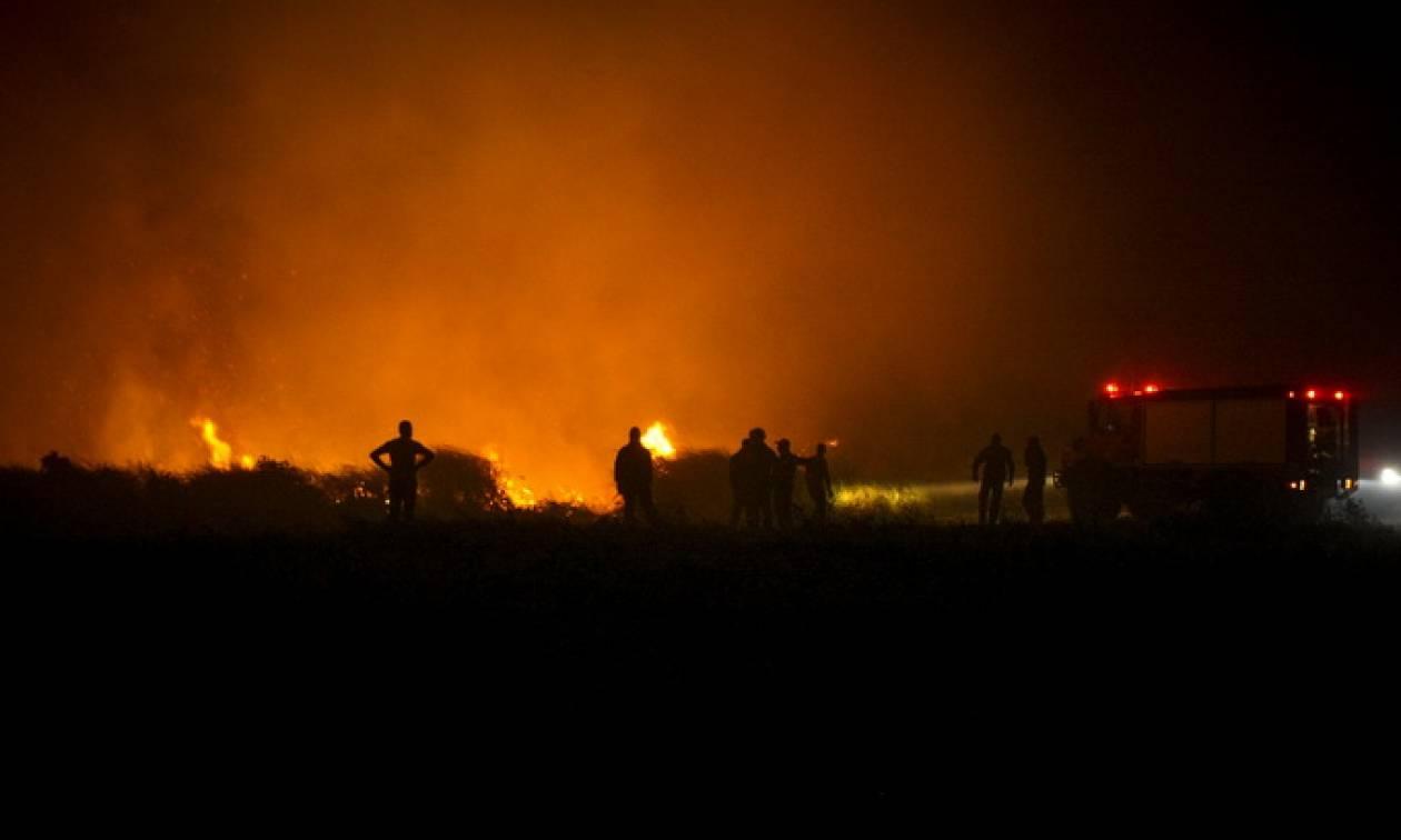 Θεσσαλονίκη: Έσβησε η φωτιά στο Δεντροπόταμο (pics&vid)