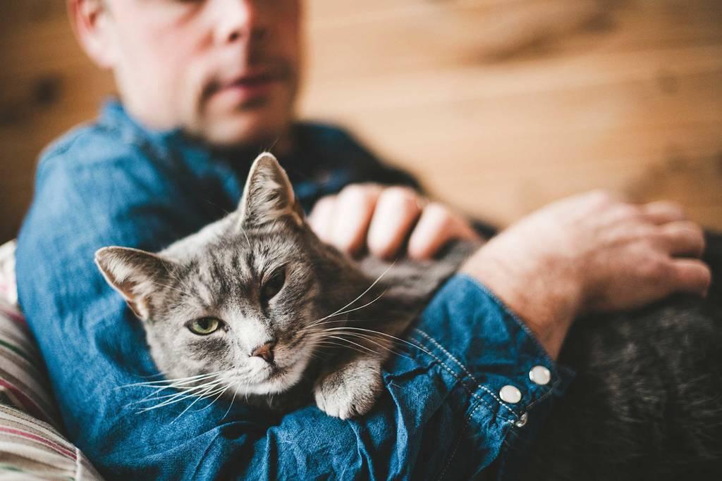 Δείτε την αντίδραση γάτας όταν το αφεντικό της δεν την αφήνει να βγεί έξω (vid)