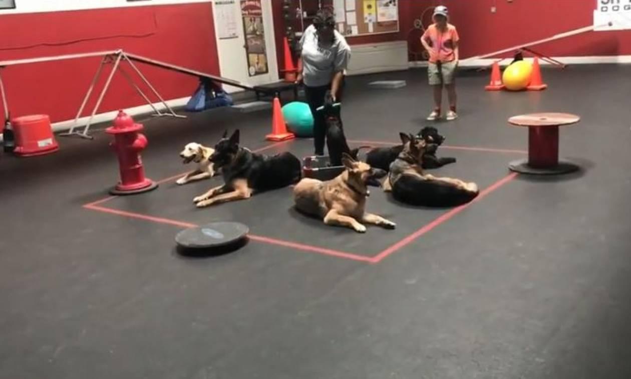 Αυτή είναι -ίσως- η πιο πρωτότυπη εκπαίδευση σκύλων (vid)