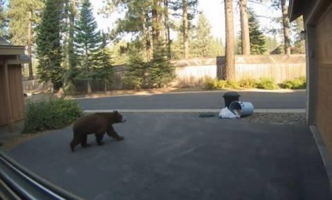 Αυτή είναι μια άπληστη και... λαίμαργη αρκούδα (vid)