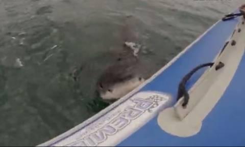 Τρομακτικό βίντεο: Καρχαρίας επιτίθεται σε φουσκωτή βάρκα με τουρίστες (vid)