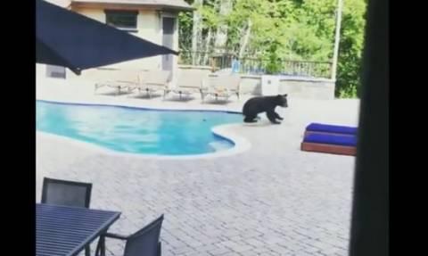 Ανάσα δροσιάς για αρκούδα! Δεν άντεχε τη ζέστη και... έκανε βουτιά στην πισίνα (vid)
