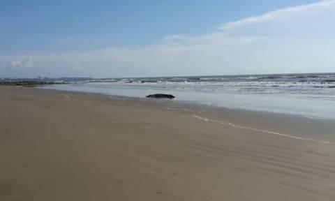 Έπαθαν ΣΟΚ όταν είδαν ποιος έκανε… ηλιοθεραπεία στην ίδια παραλία (vid)