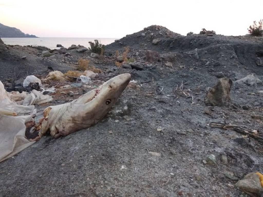 ΣΟΚ στα Χανιά: Το κομμένο κεφάλι στην παραλία «πάγωσε» το αίμα τους! Τελικά ανήκε σε κάτι τρομακτικό