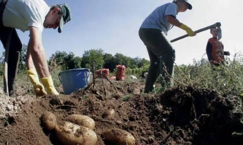 ΟΠΕΚΕΠΕ: Πότε θα πληρωθεί το 70% των αγροτικών επιδοτήσεων