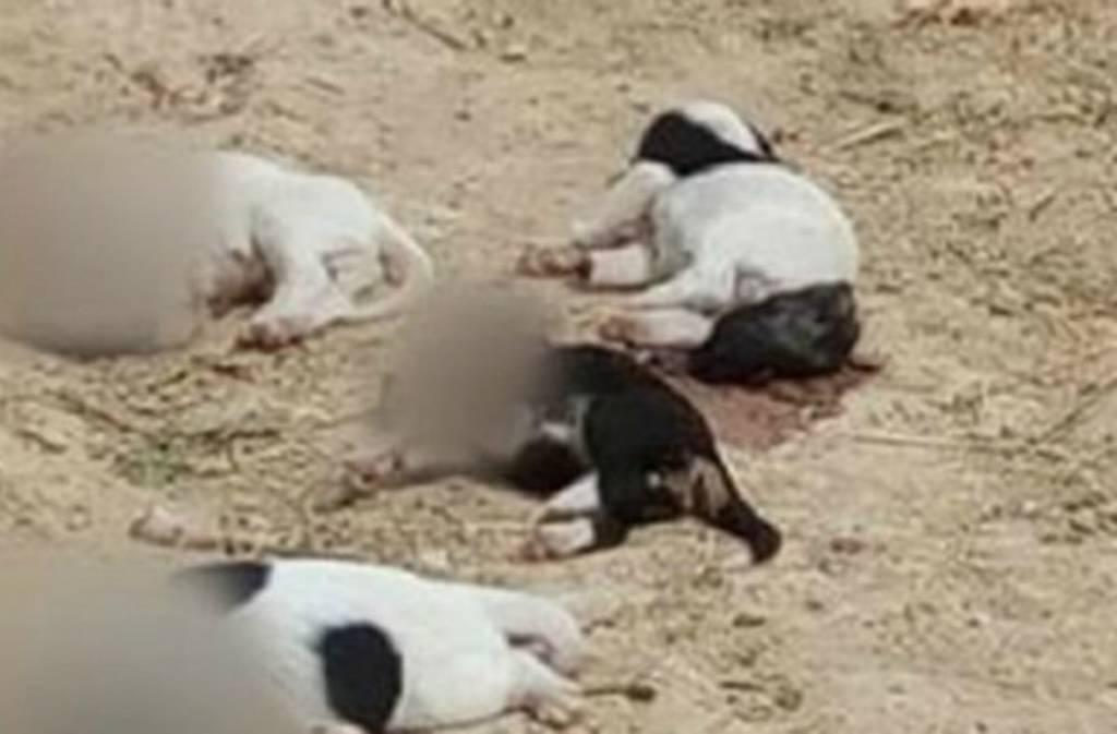 Φρίκη στη Ροδόπη: Aποκεφάλισαν κουταβάκια
