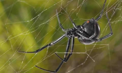 Φωτογραφίες Αιτωλικό: Πέπλο αράχνης «κατάπιε» 300 μέτρα βλάστησης (pics&vid)