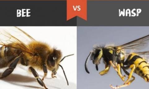 Γιατί όλοι αγαπούν τις μέλισσες και μισούν τις σφήκες;
