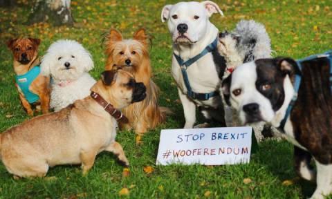Λονδίνο: Και τα κατοικίδια στη «μάχη» κατά του Brexit!