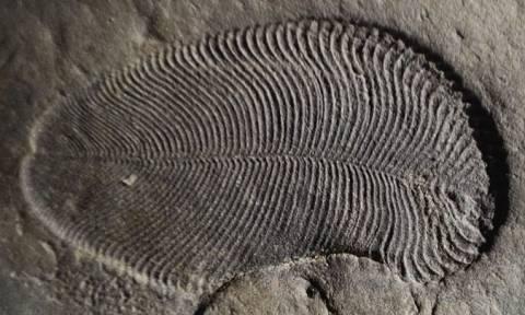 Επιστήμονες βρήκαν «ίχνη λίπους» σε απολίθωμα ζώου που έζησε πριν από 558 εκατ. χρόνια (vid)