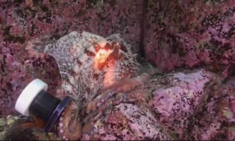 Επικό βίντεο! Χταπόδι «βουτάει» την κάμερα δύτη και... προσπαθεί να το σκάσει