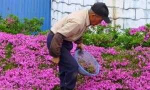 Σύζυγος φύτευε λουλούδια για 2 χρόνια - Ο λόγος θα σας κάνει να δακρύσετε (vid+pics)