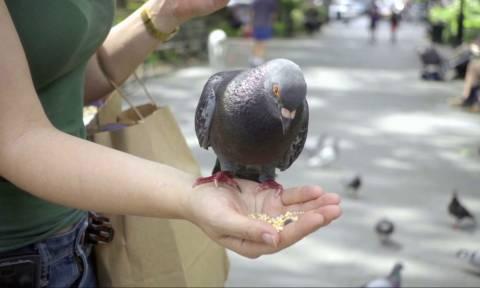 Αντιμέτωποι με ποινές φυλάκισης όσοι ταΐζουν περιστέρια