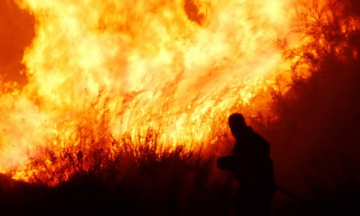 Φωτιά ΤΩΡΑ: Υπό μερικό έλεγχο η πυρκαγιά στην περιοχή της Λίμνης Προκοπίου Αχαΐας