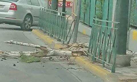 Κακοκαιρία: Κινδύνευσαν μαθητές στο Ίλιον - Ξεριζώθηκε δέντρο στα πόδια τους (pics)