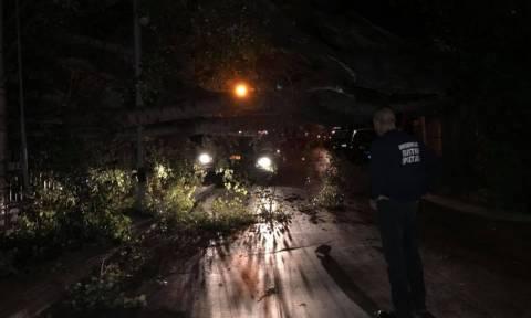 Καιρός: Σφοδροί άνεμοι ξερίζωσαν τεράστιο δέντρο έξω από τον σταθμό του ΗΣΑΠ στην Κηφισιά (Pics)