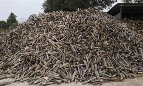 Ποιο είδος ξύλου πρέπει να επιλέγεις για το τζάκι;