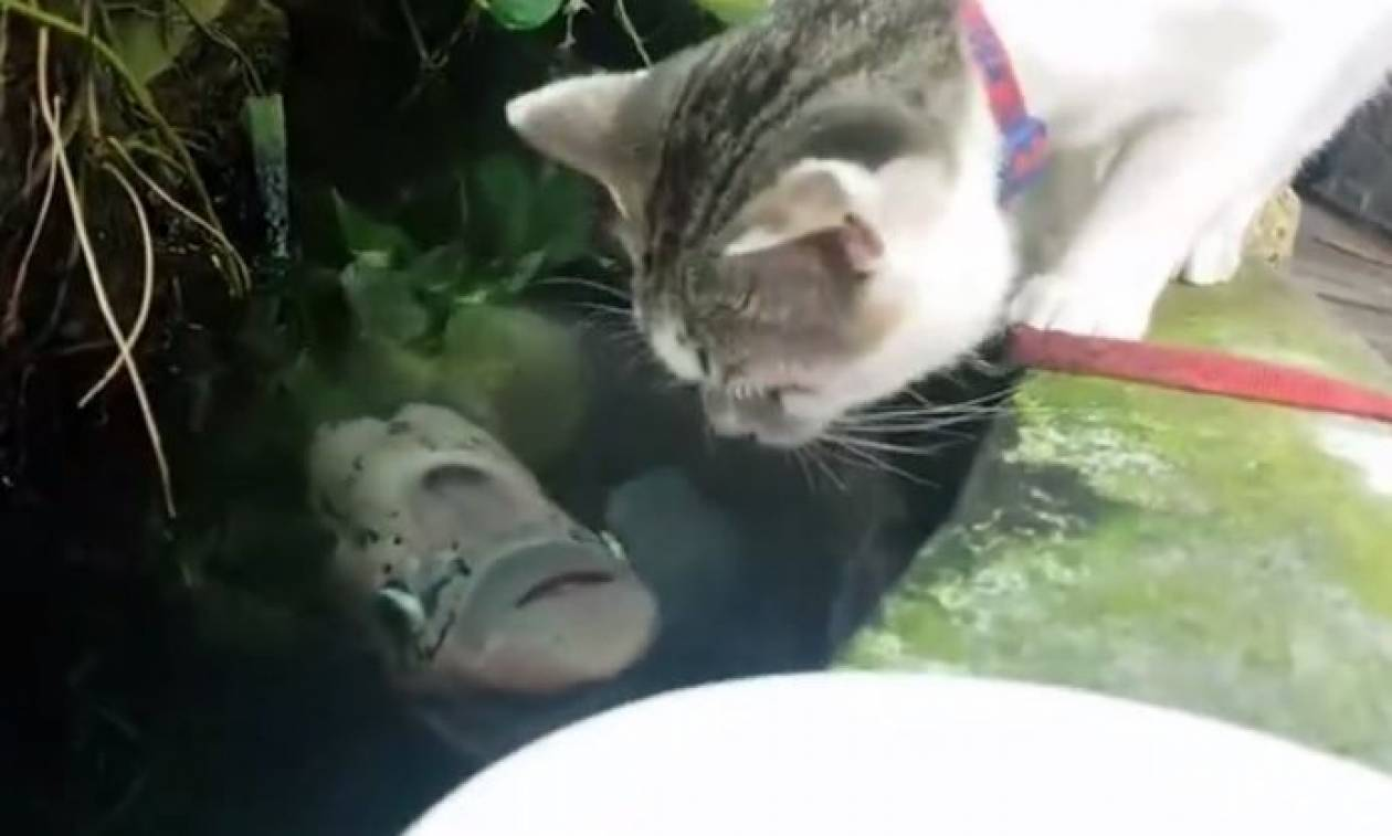 ef9f5d0d3d6e Τι συμβαίνει όταν μια γάτα πίνει νερό και ακριβώς από κάτω βρίσκεται ένα  ψάρι  (