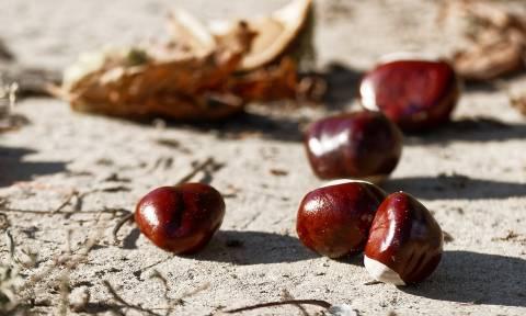 Τραγωδία στην Άρτα: Σκοτώθηκε μαζεύοντας κάστανα