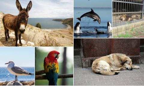 Τι έχουν να μας πουν τα ίδια τα ζώα για την Παγκόσμια Ημέρα τους;