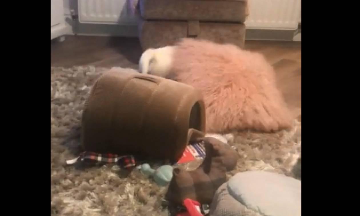 Τον άφησαν μόνο για δύο λεπτά κι αυτός διέλυσε το σαλόνι (video)