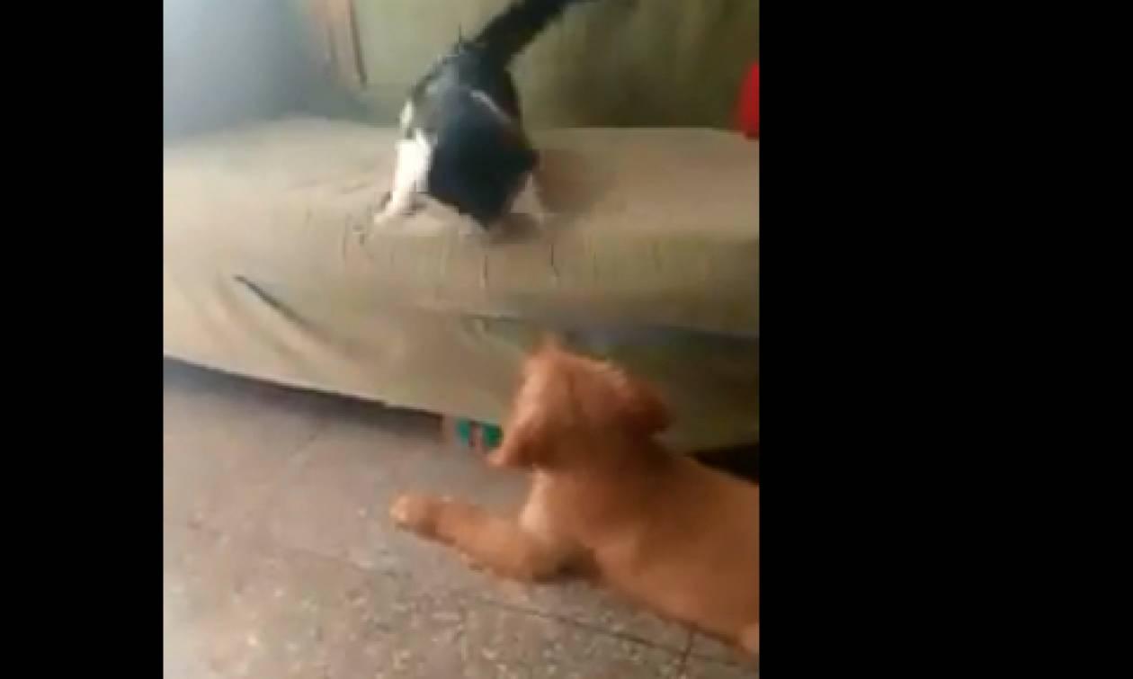 Σκυλάκι δαγκώνει την ουρά γάτας και η συνέχεια είναι αναμενόμενη! (video)