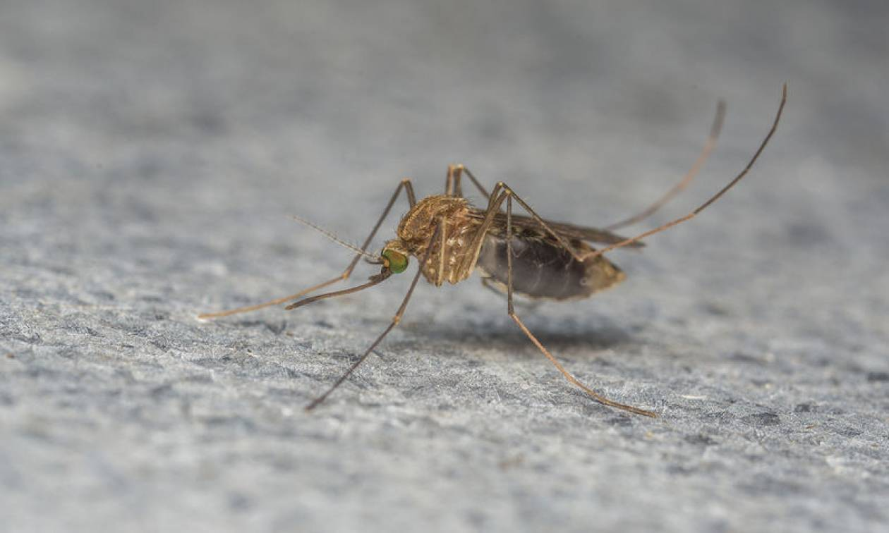 «Καλπάζει» ο ιός του Δυτικού Νείλου: Έφτασαν τους 34 οι νεκροί