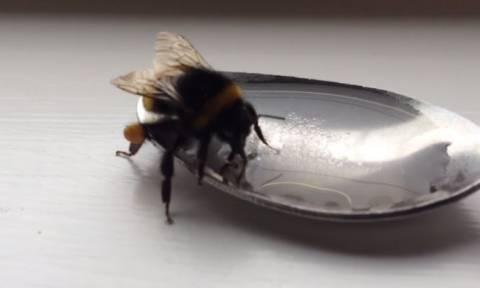 Ο απίστευτος τρόπος που σώθηκε μια μέλισσα! (vid)