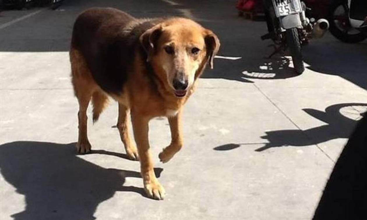 «Χάτσικο» της Κρήτης: Πέθανε ο σκύλος που είχε συγκινήσει με την αφοσίωσή του