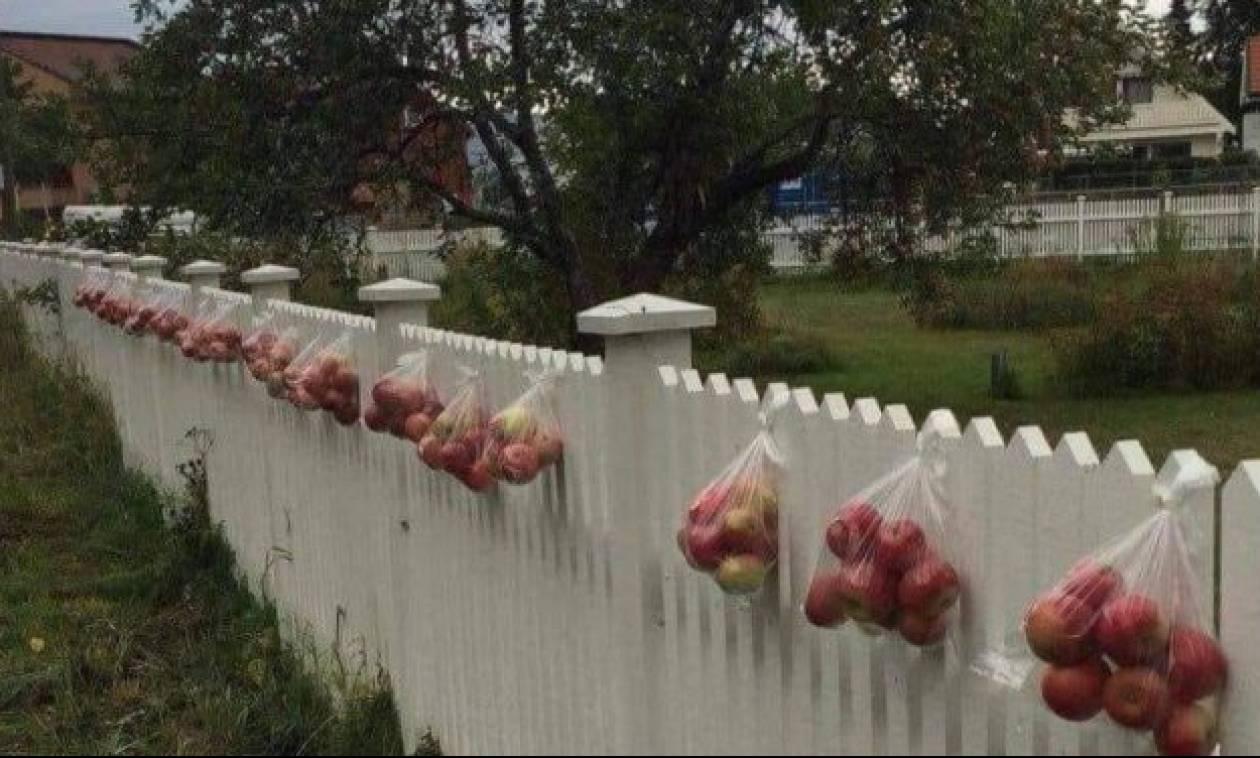 Απίστευτοι άνθρωποι οι Νορβηγοί: Όταν δείτε τον λόγο που κρεμάνε τα μήλα θα καταλάβετε!