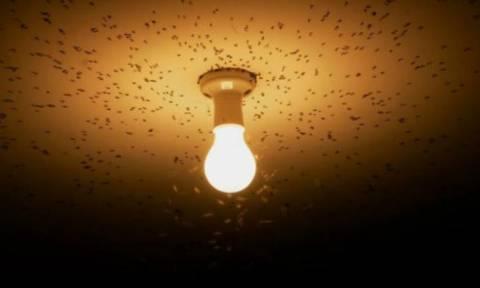 Γιατί τα έντομα πετάνε προς τις λάμπες;