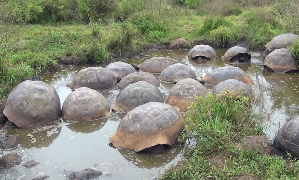 Ληστεία – μυστήριο: Έκλεψαν 123 χελώνες (Pics+Vids)