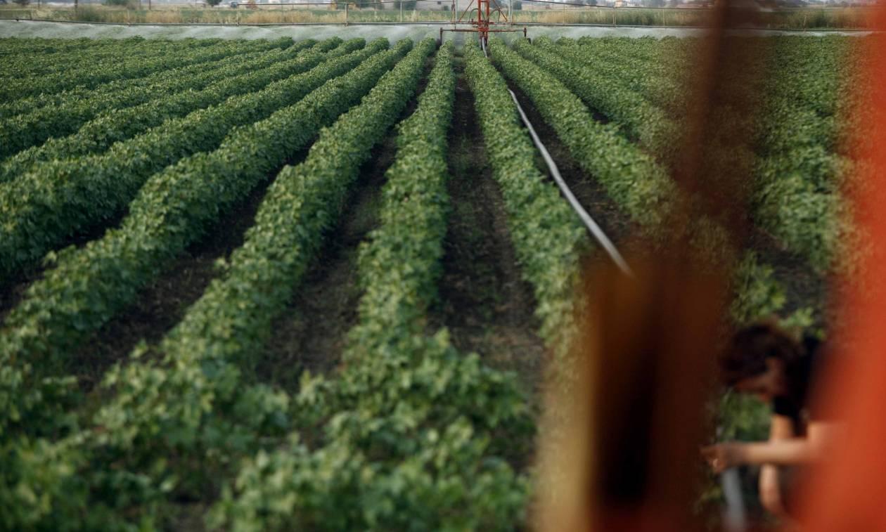 Είσαι αγρότης; Δες ΕΔΩ πώς να νοικιάσεις χωράφι με μόλις 5 ευρώ τον χρόνο