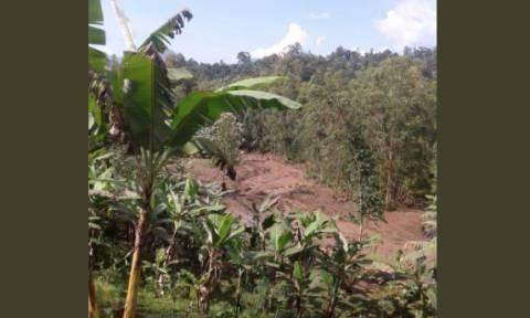 Τραγωδία στην Ουγκάντα: Δεκάδες νεκροί από κατολίσθηση (pics+vid)